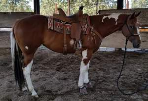 slick-left-a-dashin-under-saddle